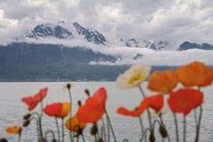 As flores bonitas crescem perto de um lago e das montanhas Foto de Stock Royalty Free