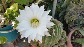As flores bonitas em Chipre Imagens de Stock Royalty Free