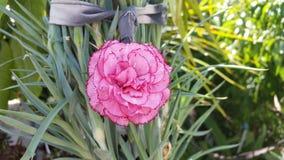 As flores bonitas em Chipre Fotografia de Stock