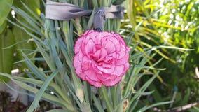 As flores bonitas em Chipre Imagem de Stock Royalty Free