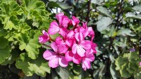 As flores bonitas em Chipre Foto de Stock Royalty Free