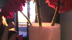 As flores bonitas em um vaso em raios do slontsa do vecherenih estão na tabela 1920x1080 video estoque
