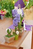 As flores bonitas violetas e brancas do jacinto no metal e em uns potenciômetros de flor de madeira estão em um contador Foto de Stock Royalty Free