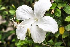 As flores brancas imagem de stock