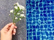 As flores brancas do áster com botão estavam guardando à mão e estavam pondo sobre o assoalho de pedra perto da piscina no verão imagens de stock