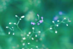 As flores brancas e roxas florescem na manhã imagens de stock
