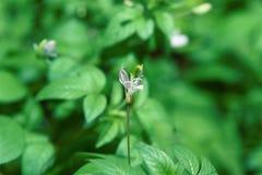 As flores brancas florescem no jardim da manhã contra um fundo imagem de stock