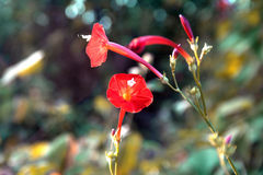 As flores coloridas Fotografia de Stock