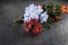 As flores com água deixam cair no fundo colorido escuro Fotos de Stock