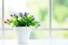 As flores com fundo da janela na manhã fotografia de stock royalty free