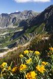 As flores com montanhas Imagem de Stock Royalty Free