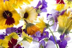 As flores comestíveis isolaram-se Imagens de Stock