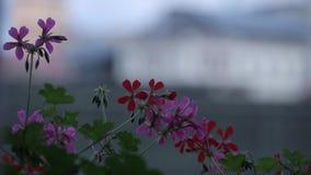 As flores cor-de-rosa balançam no vento e o verde sae em um dia ensolarado vídeos de arquivo