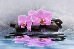 As flores cor-de-rosa bonitas da orquídea refletiram na água Imagens de Stock Royalty Free