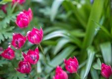 As flores cor-de-rosa pequenas fecham-se acima com fundo verde Foto de Stock Royalty Free