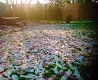 As flores cor-de-rosa são falhadas na terra com fundo da luz do sol Imagens de Stock Royalty Free