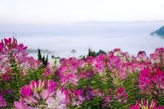 As flores cor-de-rosa são florescer bonita, sentem a beleza natural Fotografia de Stock