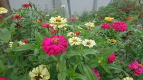 As flores crescem do solo natural foto de stock royalty free