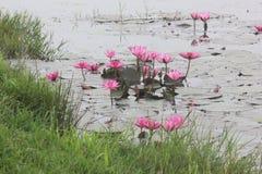 as flores crescem na vala da água imagem de stock