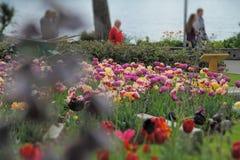 As flores crescem perto de um lago Fotografia de Stock Royalty Free