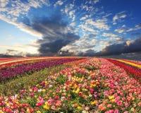 As flores crescem tiras multi-coloridas brilhantes Fotografia de Stock