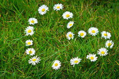 As flores da margarida deram forma à forma do coração Imagens de Stock
