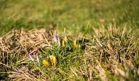 As flores da mola começam a florescer Imagem de Stock Royalty Free