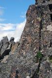 As flores da montanha fazem sua maneira ao sol na fenda da rocha Foto de Stock
