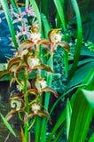 As flores da paixão, igualmente chamaram Passiflora ou as videiras da paixão, são um gênero de plantas de florescência, produzem  foto de stock royalty free