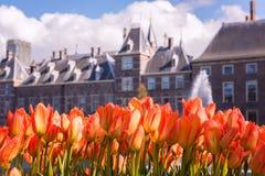 As flores da tulipa contra Binnenhof fortificam o fundo holandês do parlamento, centro de cidade de Haia Den Haag, Países Baixos foto de stock