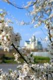 As flores de Apple florescem na primavera de um dia ensolarado bonito fotografia de stock