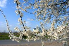 As flores de Apple florescem na primavera de um dia ensolarado bonito fotos de stock