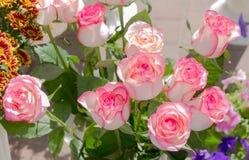 As flores de aumentaram Fotografia de Stock
