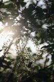 As flores de cerejeira do pássaro Fotografia de Stock Royalty Free