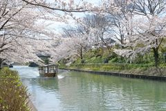 As flores de cerejeira em torno do canal de Uji na divis?o de Fushimi, Kyoto foto de stock