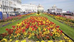 As flores de Eastbourne East Sussex e a luz do sol bonitas da mola foram apreciadas por visitantes à cidade popular do beira-mar video estoque