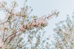As flores de florescência do jardim do fruto saltam céu azul foto de stock