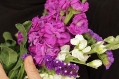 As flores de Liliums e de Helichrysum enviaram sobre o dia das mulheres Mensagem do dia das mulheres felizes no caderno Imagem de Stock Royalty Free