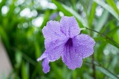 As flores de TOI Fotos de Stock Royalty Free
