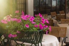 As flores decoram o restaurante, Italia Fotos de Stock Royalty Free