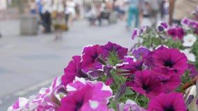 As flores decoram as ruas da cidade, close-up No fundo, uma multidão de povos não está no foco Um sumário vídeos de arquivo