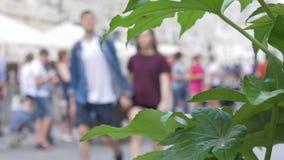 As flores decoram as ruas da cidade, close-up No fundo, uma multidão de povos não está no foco Um sumário filme