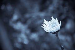 As flores dispararam em um estilo da bela arte em um estúdio Fotografia de Stock