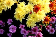 As flores do outono fecham-se acima das vistas imagens de stock royalty free