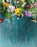 As flores do verão zombam acima Imagens de Stock