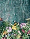 As flores do verão zombam acima Fotografia de Stock