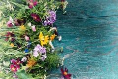 As flores do verão zombam acima Imagem de Stock Royalty Free