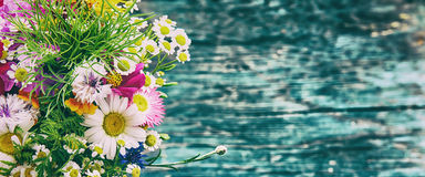 As flores do verão zombam acima Foto de Stock Royalty Free