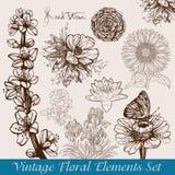 As flores do vintage ajustaram-se Imagens de Stock Royalty Free