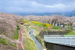 As flores e as árvores de cereja coloridas no parque ao longo dos bancos de rio de Shiroishi vistos de Shibata Seno constroem uma foto de stock